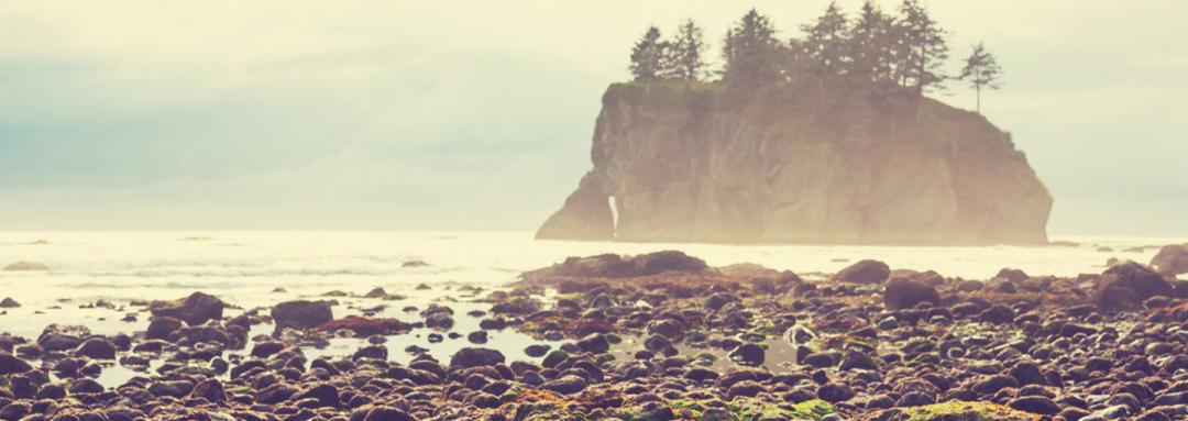 Natural Wonders Near Our Olympic National Park Hotel